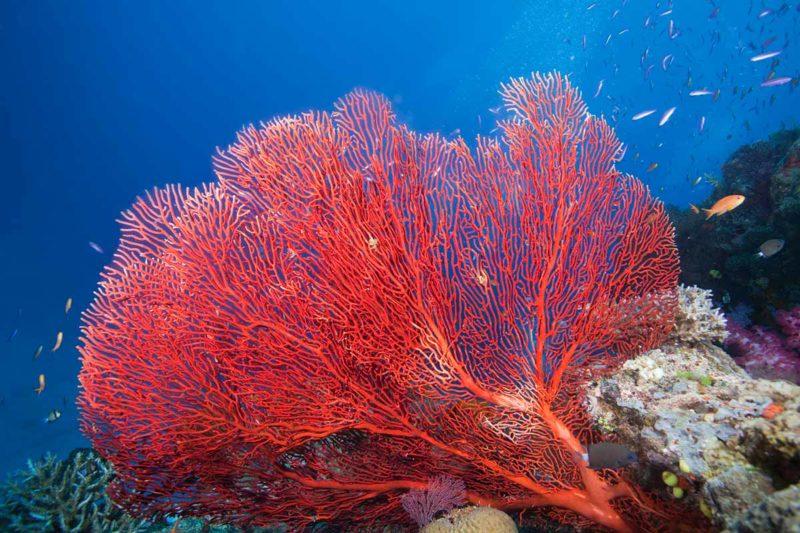 Sango Meeres Koralle Guide: Wie gut ist das Superfood wirklich?